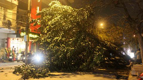 Hà Nội: Cây bật gốc đổ chắn giữa phố