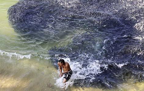 Cá dạt hàng loạt về Mexico do động đất Nhật 20110314102741_c5