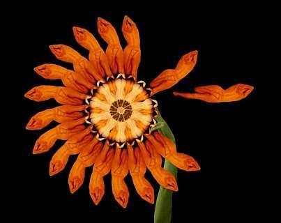 20110526171952 12 Ảnh Khỏa Thân   Những bức ảnh khỏa thân nghệ thuật tuyệt đẹp