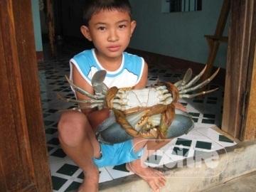 Con cua trên đầm Ô Loan (Nguồn: Tuổi trẻ)