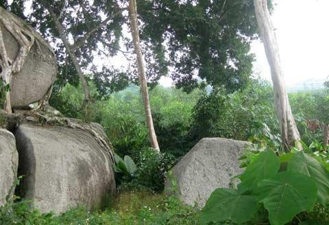 Ngắm cây sanh 'có 1 không 2', giá hàng chục tỷ ảnh 11
