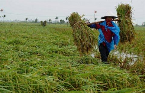 Những điểm khiến thế giới sửng sốt về Việt Nam
