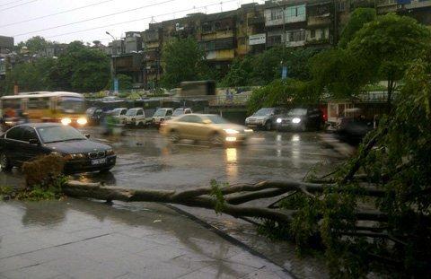 HN: Mưa lớn, cây đổ đè 1 tài xế taxi tử vong ảnh 1