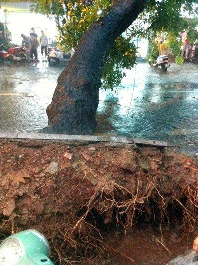 HN: Mưa lớn, cây đổ đè 1 tài xế taxi tử vong ảnh 6