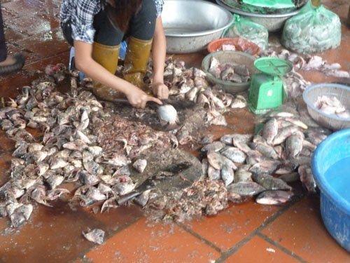 Công nghệ làm bún cá siêu bẩn tại Việt Nam