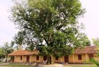 4 cây di sản kỳ lạ ở một trường học