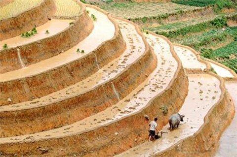 Đẹp ngỡ ngàng những thửa ruộng bậc thang - Kỹ Năng Việt | Pro.edu.vn 14