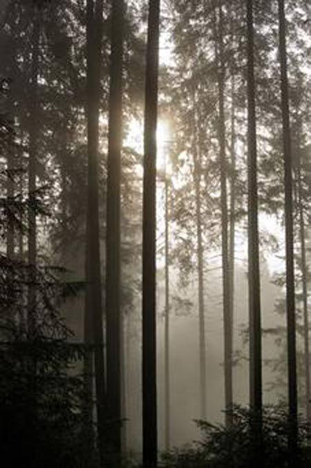 Những khu rừng ma ám rùng rợn nhất