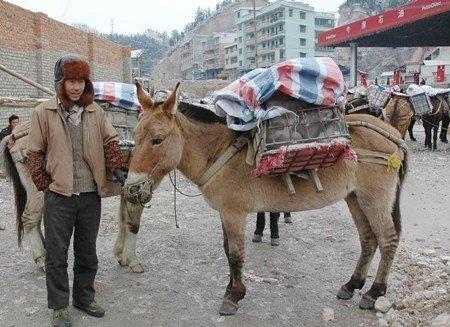 Tiêu điểm - Người Trung Quốc cưỡi lừa, đi bộ về quê ăn tết (Hình 4).