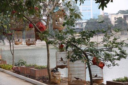 """""""Bird park"""" in Hanoi"""