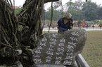 Những cây cảnh… kỳ dị nhất Việt Nam