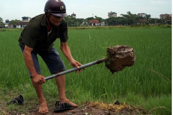 Làng đại gia lúa giống ở Hà Nam