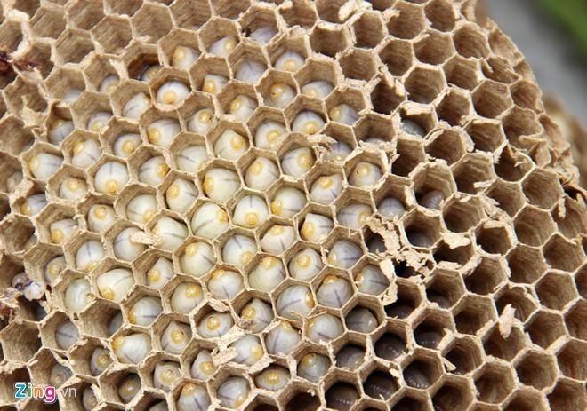 Cảnh ngâm rượu nghìn con ong dữ ở miền Tây