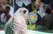 Thảo Cầm Viên nhân giống thành công hổ trắng Bengal