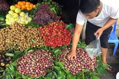 Chanh Việt ép giá mua rẻ, bị lừa ăn ngàn tấn mận Tàu