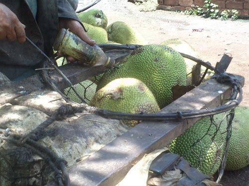 trái cây, hóa chất, sầu riêng,Krông Pắk, tỉnh Đắk Lắk ,Bảo vệ thực vật TP HCM