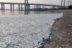 Cá chết trắng sông gần hiện trường vụ nổ Thiên Tân