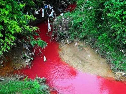 cá chết., nguyên nhân, sông máu, ô nhiễm