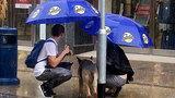 Cặp đôi cởi áo khoác che mưa cho chú chó