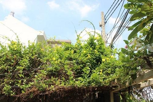 Biệt thự 'không móng' làm từ 28 chiếc container tại Sài Gòn