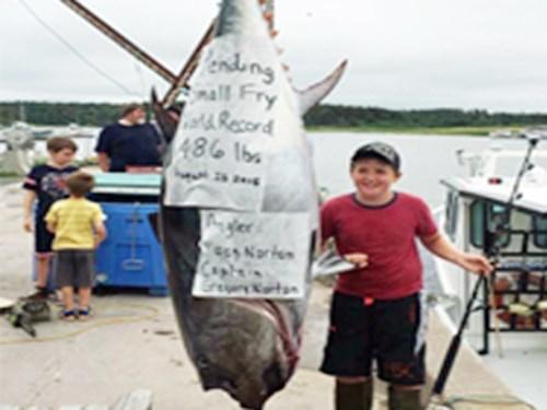 10 tuổi, cá ngừ, đi câu, 220kg
