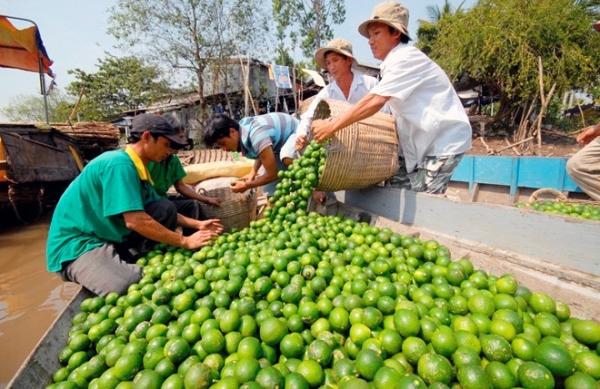 nông dân, dưa hấu, thị trường, muối, điều tiết, được mùa mất giá, nông-dân, được-mùa-mất-giá, thị-trường, rẻ-mạt