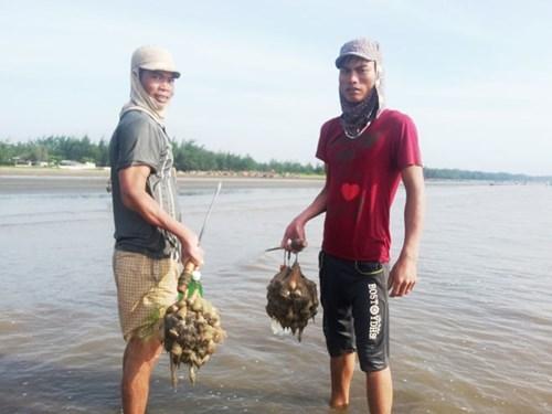Nghệ An: Đổ ra biển săn thần dược tăng lực