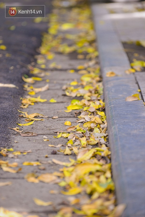 mùa thu, Hà Nội, sấu chín, hương cốm