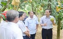 Hà Tĩnh phát triển chuỗi liên kết nông nghiệp