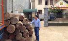 Bắt hơn 5m3 gỗ lậu trong nhà nguyên phó bí thư huyện ủy