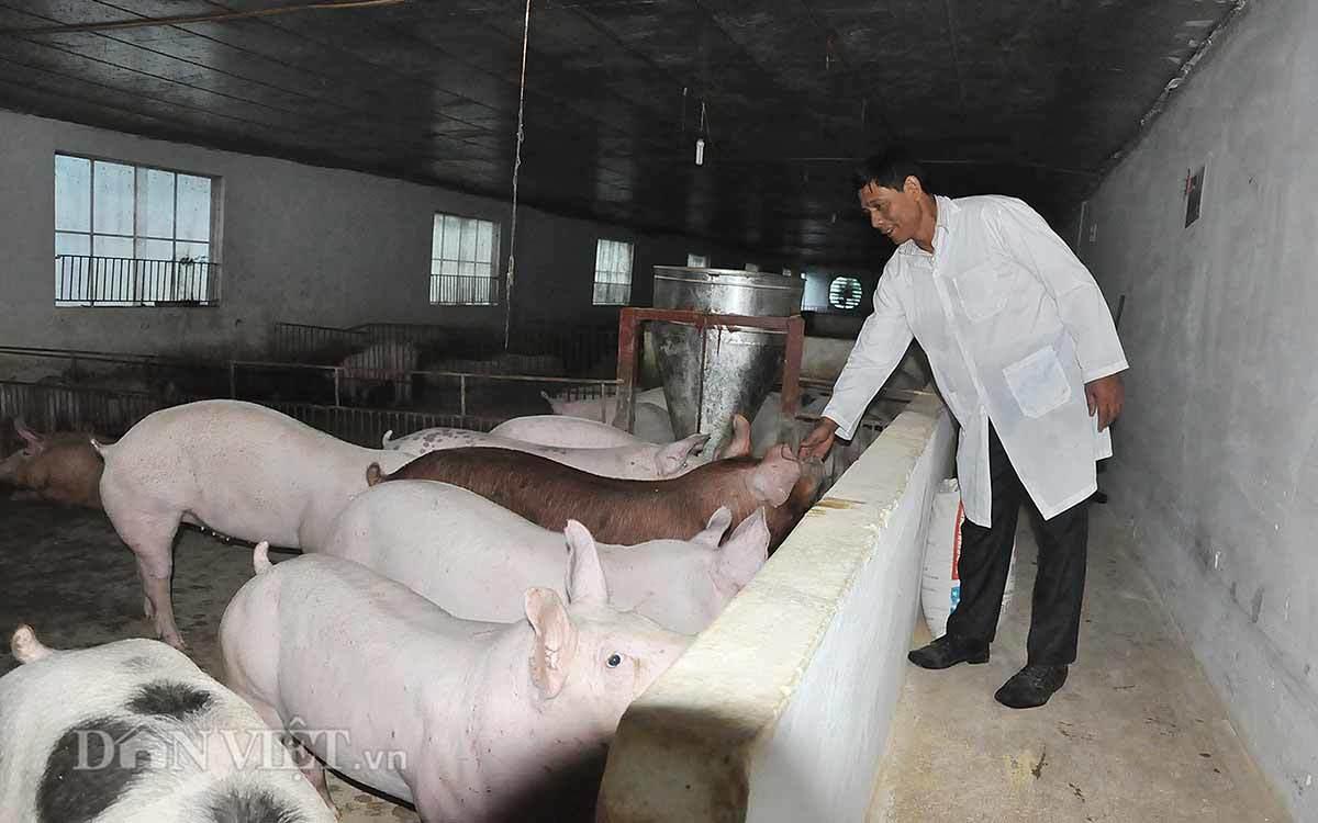 Khó tin Hà Nội: Lợn ở chung cư, đi lại bằng thang máy
