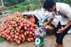 Thanh long 10 ngàn/kg đổ đống khắp vỉa hè Hà Nội