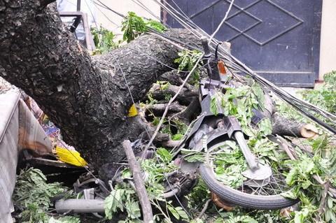 cây đổ, quán cơm, tiệm tạp hóa, thoát chết