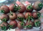 Ăn cà chua lạ, đắt gấp 10 vẫn tranh nhau mua