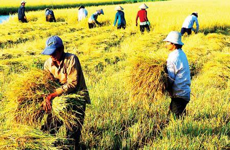 Việt Nam: 40 mươi năm chưa qua khỏi cánh đồng?