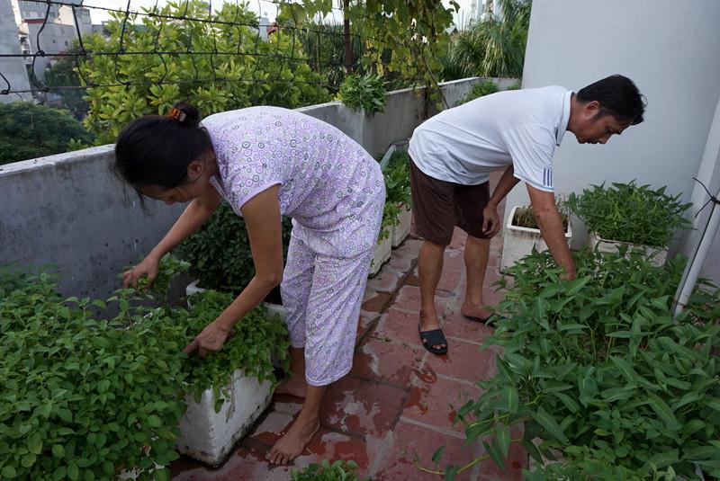 Trang trại 'nhà nông' ở lưng chừng trời Hà Nội