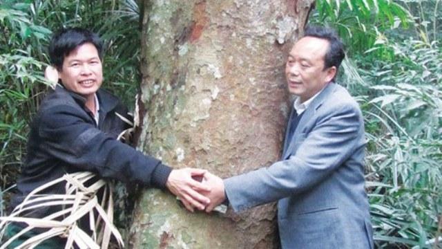 gỗ quý hiếm, cụ lim, rừng lim cổ thụ, Yên Thành, cây lim, rừng-lim, cây-lim, quý-hiếm, báu-vật
