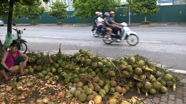 Dừa xiêm 'siêu rẻ' tràn ngập vỉa hè Hà Nội