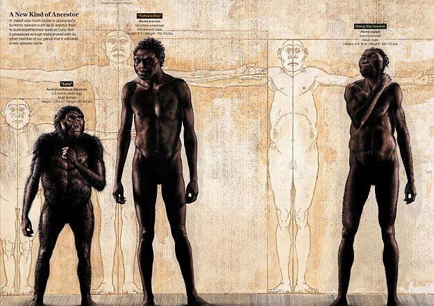loài người mới, người hiện đại, vượn người phương Nam, tiến hóa, xương hóa thạch