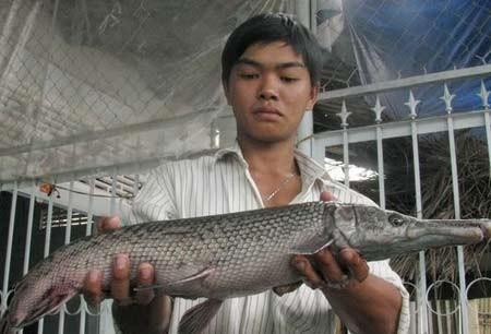 Những thủy quái đáng sợ nhất Việt Nam bất ngờ sa lưới
