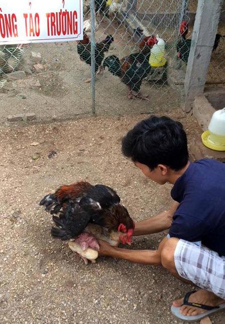 Thương lái Trung Quốc đổ xô mua gà 'tiến vua': Mừng ít, lo nhiều