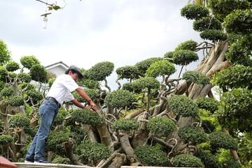 Đại gia rao bán vườn cây cảnh 170 tỷ đồng