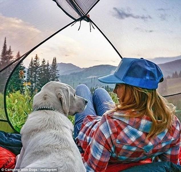 thú cưng, du lịch, trải nghiệm