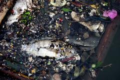 Hậu lụt ở Sài Gòn: xác cá và rác nổi đầy mặt kênh Nhiêu Lộc