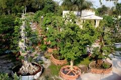 Vườn cây cảnh 170 tỷ: Giá ảo ai mua?