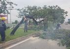 Lốc xoáy, hàng chục cây xanh Sài Gòn bật gốc