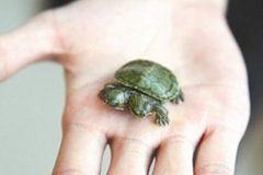 Rùa đột biến 2 đầu chào đời ở Trung Quốc