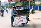 'Mận Sapa' tím bầm: Đích thị hàng Tàu đội lốt