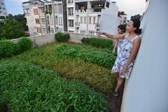 'Ruộng rau muống' trên sân thượng nhà 3 tầng Hà Nội