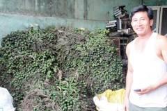 Những tỷ phú ở làng buôn cau số 1 Việt Nam